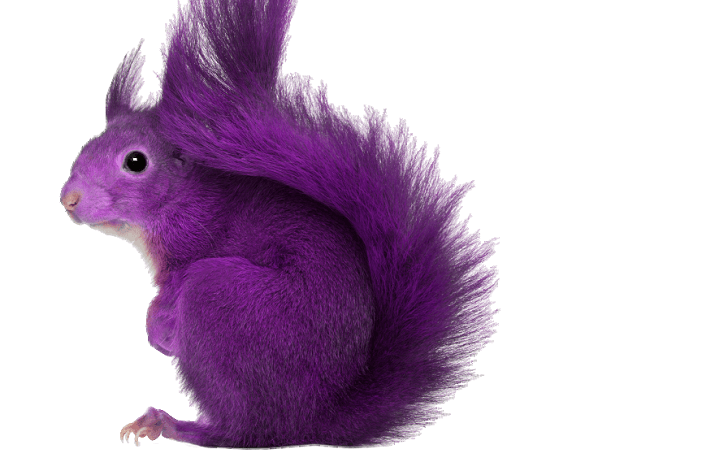 The Purple Squirrel Exists, and We Can Find Them